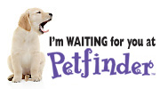 Petfinder: A new pet is https://www.petfinder.com/widgets-graphics/widgets.html?widget=23#waiting for you at Petfinder