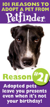 Petfinder: 101 Reasons to Adopt ... pets leave you presents