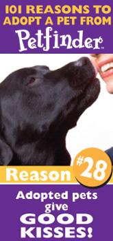 Petfinder: 101 Reasons to Adopt ... pets give good kisses