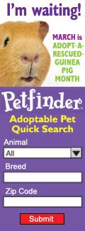petfinder download center