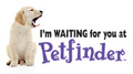 I'm Waiting for You at Petfinder