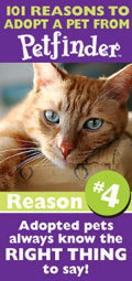 Featured Petfinder Widget - 101 Reasons to Adopt - Reason number 4: They always know the right thing to say.