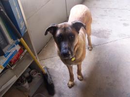 Photo of ERNIE, a dog