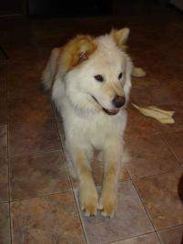 Photo of Inara, a dog