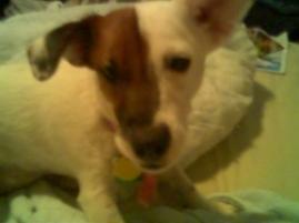 Photo of Lottie, a dog