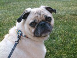Photo of Herbie, a dog
