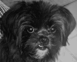 Photo of Precious, a dog