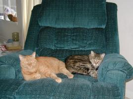 Photo of Bogart and Emily, a cat