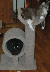 Photo of Paris and Chumley, a cat