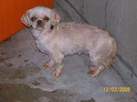 Photo of Tashi, a dog