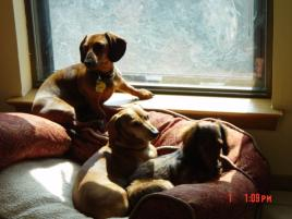 Photo of Elmo and Flynn, a dog