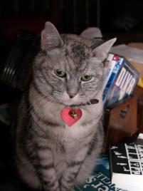 Photo of Heidi aka The Kitten, a cat