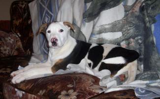 Photo of Jackson, a dog