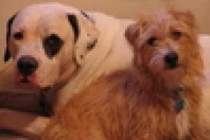 Photo of Otis & Moose, a dog