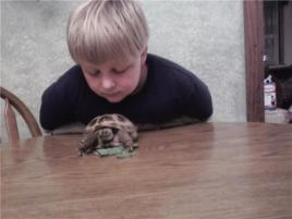 Photo of Rosie the russian to, a reptile