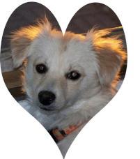 Photo of Murphy, a dog