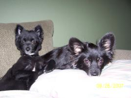 Photo of Buster and Tux, a dog