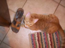 Photo of Ernie, a cat