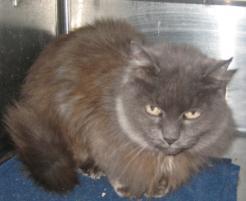 Photo of Smokey, a cat