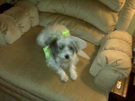 Photo of Daisy, a dog
