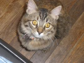 Photo of Mischa, a cat