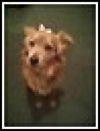 Photo of Daphney, a dog