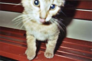 Photo of Tigger, a cat