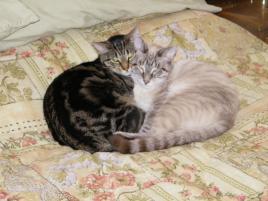 Photo of Mitzi & Smokey, a cat