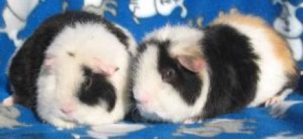 Photo of Patches and Lulu, a small & furry animal