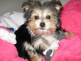Photo of MOCHI, a dog