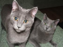 Photo of Anastasia and Tatian, a cat