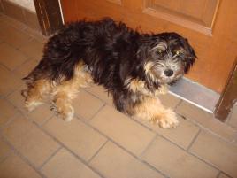 Photo of Poppy, a dog