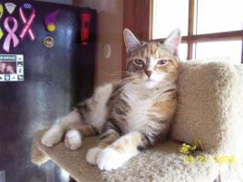 Photo of Abby, a cat