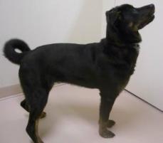 Photo of Wingnut, a dog