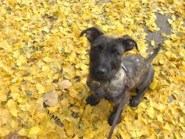 Photo of Luna, a dog
