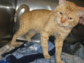 Photo of George, a cat