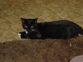 "Photo of Mama Rose (""Rosie""), a cat"