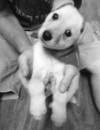 Photo of Cash Jackson, a dog