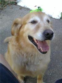 Photo of Harley, a dog