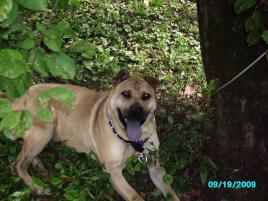 Photo of Otis , a dog
