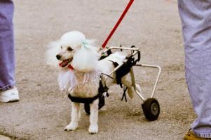 Photo of Mini, a dog