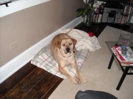 Photo of Stella, a dog