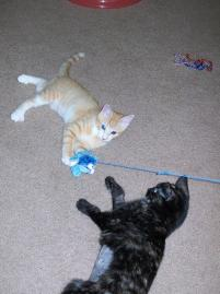 Photo of Butterscotch and Spo, a cat