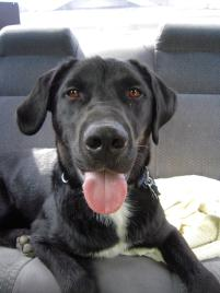 Photo of Deeken, a dog