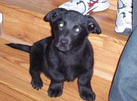 Photo of Chaco, a dog