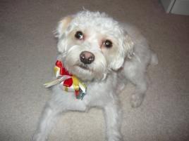 Photo of Otis, a dog