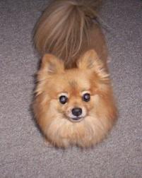 Photo of Tommy boy, a dog