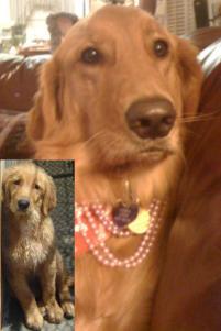 Photo of Emma, a dog