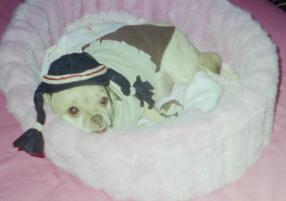 Photo of Olivia Grace, a dog