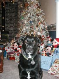 Photo of Annie, a dog